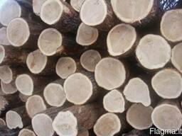 Куплю - Куплю неколотые дубовые дрова, брёвна