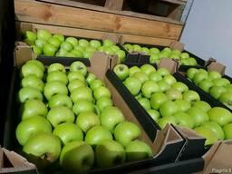 Продам яблоки из Польши - фото 6