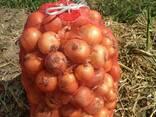 Овощи - фото 2