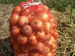 Овощи - photo 2