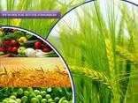 Pesticīdu ražotājs un piegādātājs visā pasaulē - photo 1