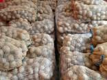 Продаем литовский картофель напрямую - фото 5